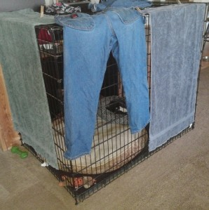 Our XXL crate that doubles as a clothes dryer which double as a curtain so Magnus can't see Blue hiding by the couch in the living room. If I don't have clothes to dry, we drape a blanket over the crate.